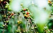Förvara kaffe - 4 enkla tips som håller kaffet fräscht - Linda Advized guidar