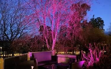 Philips Hue Lily - Test - Varför ska du skaffa spotlights till trädgården?