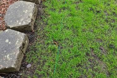 Lägg ut begränsningskabeln - Installera robotgräsklippare - så här gör du, steg för steg